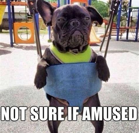 Grumpy Dog Meme - grumpy dog quotes quotesgram
