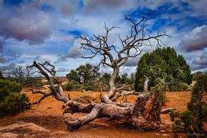 a fallen tree in the desert tomfear tomfear
