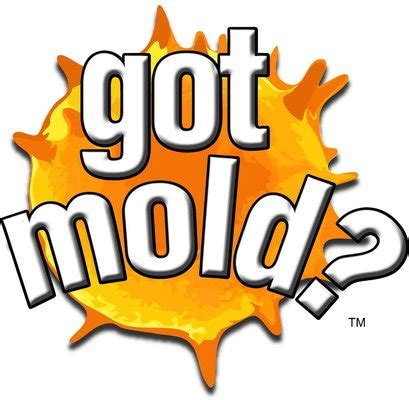 mold connect trades