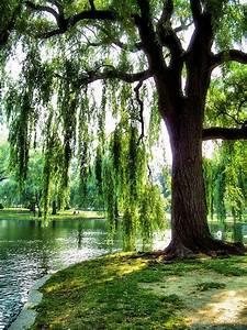 Baum Am Wasser : trauerweide am wasser baum fotografie landschaftsbilder ~ A.2002-acura-tl-radio.info Haus und Dekorationen
