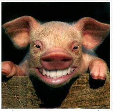 termakan babi tak perlu samak kata dr asri sehinggit