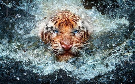 Wildlife Backgrounds For Desktop ·① Wallpapertag