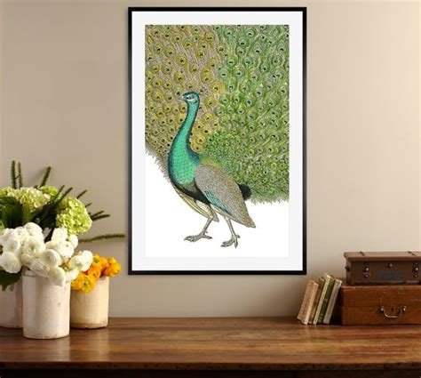 peacock framed print by zlatka paneva pottery barn