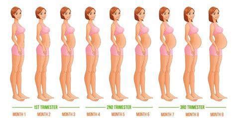 Janin 7 Bulan Lahir 20 Istilah Seputar Kehamilan Yang Perlu Diketahui Biar