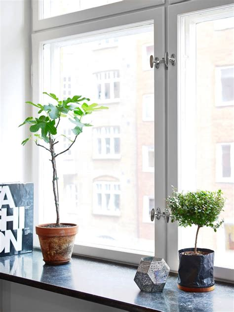 Indoor Window Sill Plants by Windowsill Plants Cacti Succulents Plants