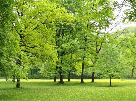 Englischer Garten Munich Wiki by File Landscape Englischer Garten Munich Dsc07139 Jpg