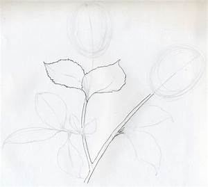 Rose Sketch You Will Enjoy