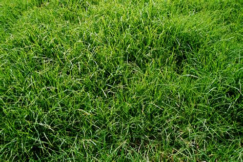 The Best Time To Install Sod On A Lawn