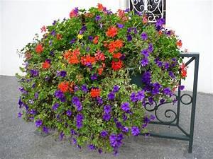 Jardiniere Fleurie Plein Soleil : fleurs d t en jardini re plein soleil plante plein ~ Melissatoandfro.com Idées de Décoration