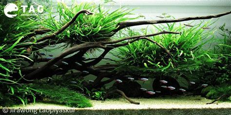 Nature Aquascape by Nature Aquascape By Jirapong Laopiyasakul Nature
