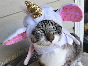 cat unicorn introducing the cross eyed pirate cat named spangles