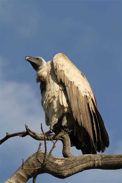 Birds On Safari In Northern Tanzania Africa Easy