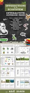 1085 Best Teacher Stuff Images On Pinterest