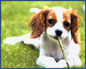 cute small dog breeds don t shed stay small