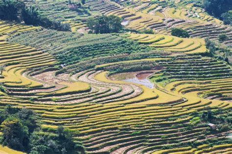 yuanyang rice terraces southern china yuanyang rice terraces voyager
