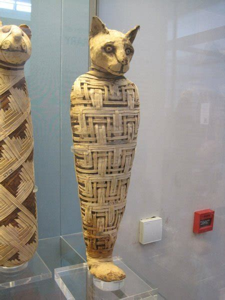 mummified cat photo