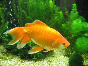 tank sizes  living conditions  affect fish injaf