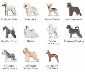 Do Basenji Mixes Shed by Pet Info January 2013
