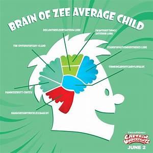 Brain Of Ze Average Child Diagram