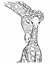 Giraffe Coloring Pages Fun Print sketch template