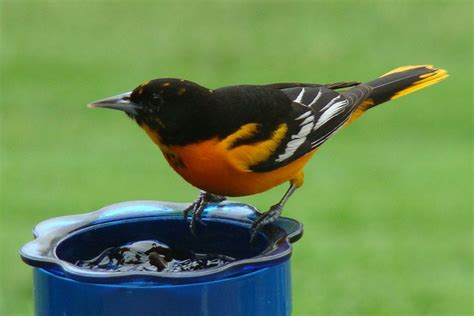 Top 10 Weird Things to Feed Birds (With images) How to