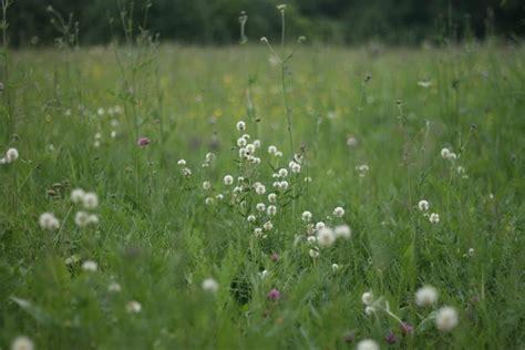 Latvijas Dabas fonds meklē saimniecības, kas dabas ...