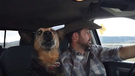 Dog loves country music – owner records him singing his ...