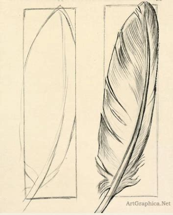 feather crafts drawings drawing  beginners art