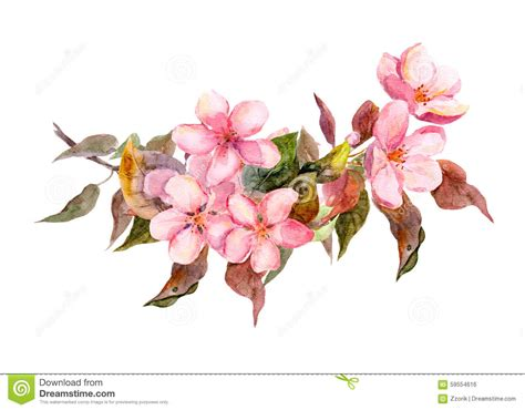 blossom branch  pink flowers watercolor stock