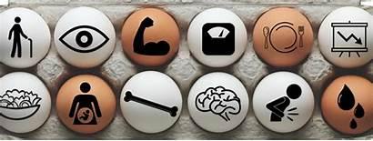 Dozen Egg Eggs Nutrition Benefit Nutrients Ways