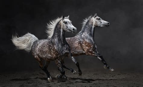 wallpaper horses brown gallop animals