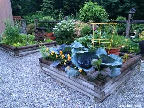 how to enhance your garden with gravel