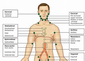 Lymph Node Locations Diagram Chest