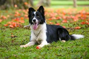 30 healthiest dog breeds that live the longest
