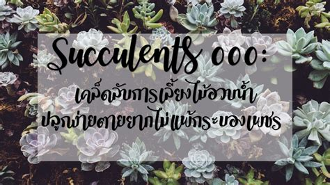 Succulents 000: เคล็ดลับการเลี้ยงไม้อวบน้ำ ปลูกง่ายตายยาก ...