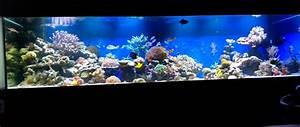 Süßwasserfische Fürs Aquarium : referenzen meerwasser aquarium aquaristik center ost ~ Lizthompson.info Haus und Dekorationen