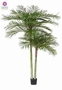 Zimmerpflanzen Auf Rechnung : die besten 25 k nstliche palmen ideen auf pinterest innen palmen gro e zimmerpflanzen ~ Themetempest.com Abrechnung
