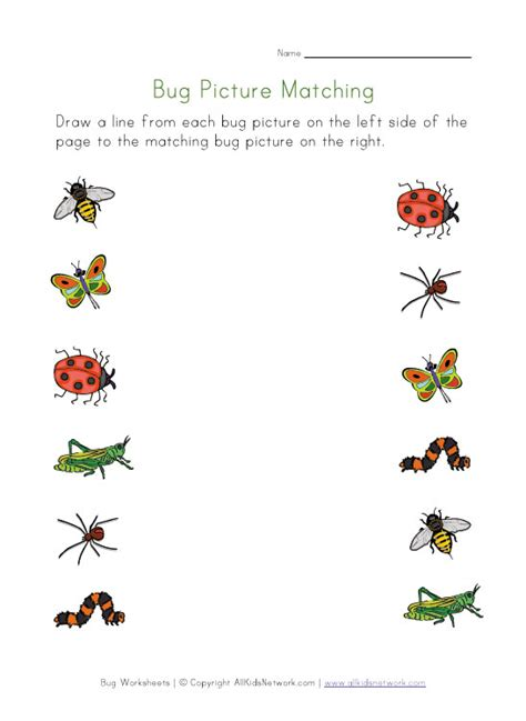 bugs worksheet for kids picture matching