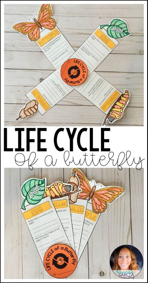 life cycle   butterfly fact fan distance learning life cycles butterflies activities