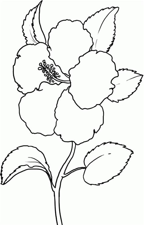 coloring pages  hibiscus flowers coloring home