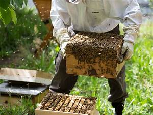 Beekeeping In Nigeria; 7 steps to start & make good money ...