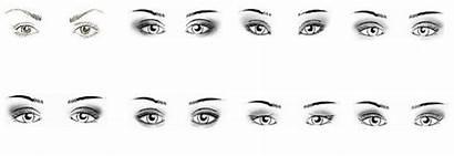 Eyes Asian Makeup Caucasian Crease Types Eyeshadow