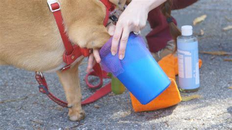 portable dog paw washer  images dog