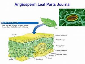 Ppt - Plant Cell Journal