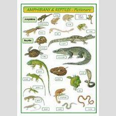 English Worksheet Amphibians & Reptiles  Pictionary  Science  Pinterest English