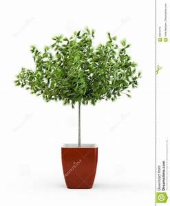 Arbre En Pot : usine mise en pot de grand arbre vert illustration stock ~ Premium-room.com Idées de Décoration