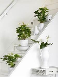 Zimmerpflanzen Pflege Tipps : zimmerpflanzen in bilder pflege tipps trends und ~ Lizthompson.info Haus und Dekorationen