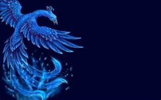 bird wallpaper hd pixelstalk net