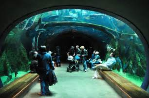 a survey of awesome aquarium architecture flavorwire