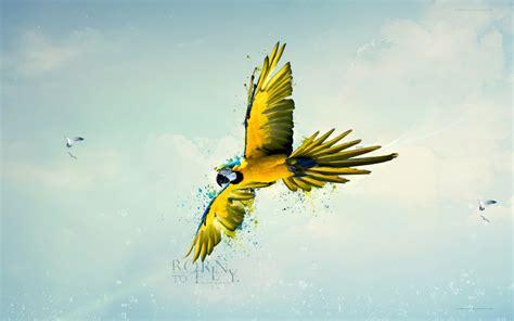 Loro Nacido Para Volar Wallpaper  Wallpapers Gratis